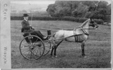 horse and cart mystery